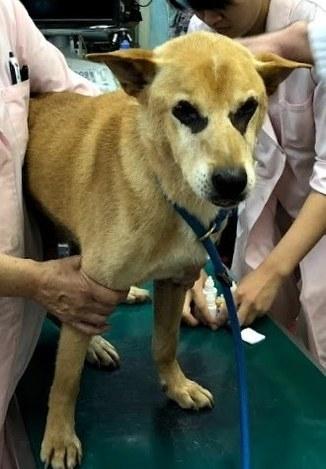 保護 犬 福岡