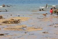 がれきや土砂などが流れ着いた海岸で、犬を散歩させる女性=広島県坂町で2018年7月19日午前10時37分、宮武祐希撮影