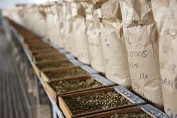 現在のエチオピアの主要産業は農業だが…(Bloomberg)