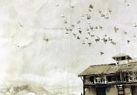 北アルプス(左下)を望みながら飛ぶハトと小屋=市立大町山岳博物館提供
