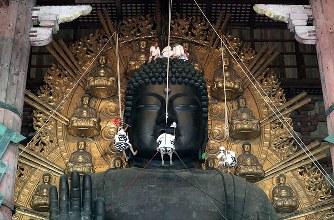 東大寺の大仏様「お身拭い」 ほこり払う夏の行事