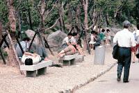 ベンチに横になってで休憩する人たち=1970年