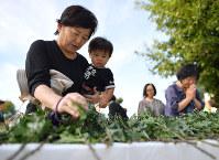 10人が犠牲になった八木ケ丘団地の犠牲者追悼献花式で、1歳の孫と献花する女性(左)。「災害が起きて地域を離れる人もいる。町が寂しくなった」と話した=広島市安佐南区で2018年8月20日午前8時14分、山田尚弘撮影