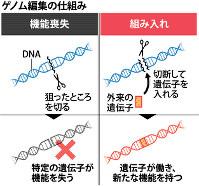 ゲノム編集の仕組み