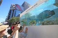 銀座ソニーパークに設置された大水槽の魚を見る通行人=東京都中央区で2018年8月25日、玉城達郎撮影