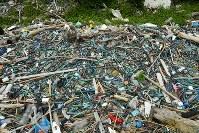 カキ養殖に使われるプラスチック製のパイプは今回調査したどの浜辺でも大量に見つかった=愛媛県伊方町で2018年7月4日、小松雄介撮影