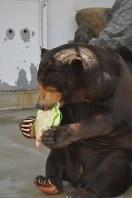 好物のケーキにかぶりつくツヨシ=徳山動物園で2015年8月22日午前11時17分、小中真樹雄撮影