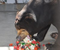 ケーキにかぶりつくツヨシ=周南市で2012年8月26日午前11時25分、小中真樹雄撮影