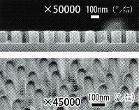 シリコーンの表面に再現した突起構造(上)とクマゼミの羽の突起構造(下)=伊藤健・関西大教授提供