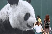 上野動物園入口にあるパンダの写真の前で記念撮影する観光客。さまざまなポーズで何枚も撮っていた=台東区で2018年8月16日、佐々木順一撮影