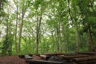 アファンの森にあるたき火専用の炉=C.W.ニコル・アファンの森財団提供