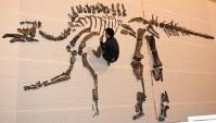 化石取り出しが完了したむかわ竜の全身骨格=北海道むかわ町で