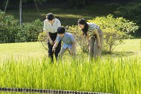 散策される悠仁さま(中央)と眞子さま(左)、佳子さま(右)=東京・元赤坂の赤坂御用地で2018年8月10日撮影(宮内庁提供)