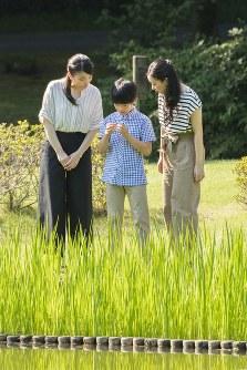セミの抜け殻をご覧になる悠仁さま(中央)と眞子さま(左)、佳子さま(右)=東京・元赤坂の赤坂御用地で2018年8月10日(宮内庁提供)