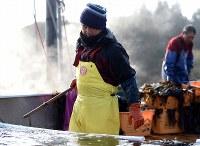 収穫したワカメを海水でゆでる及川健さん(左)。3~4月ごろはワカメ漁に専従する=宮城県南三陸町で2018年4月2日、喜屋武真之介撮影