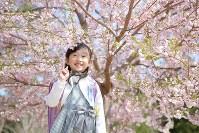 小学校の入学式の日、自宅そばの桜の前で笑顔を見せる及川真乃愛さん(7)=宮城県南三陸町で2018年4月9日、喜屋武真之介撮影