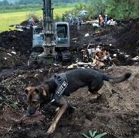 多くの日用品が掘り出される土砂崩れ現場で、安否不明者の捜索をする航空自衛隊の警備犬=北海道厚真町で2018年9月8日午前7時45分、貝塚太一撮影