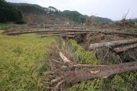 地震による大規模な土砂崩れが起き、大量の木や土砂に埋まった現場で安否不明者を捜索する消防隊員ら(奧)=北海道厚真町幌内で2018年9月9日午後2時36分、和田大典撮影