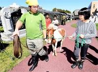 被災者のストレスを軽減する馬=北海道厚真町で2018年9月11日午後0時2分、山崎一輝撮影