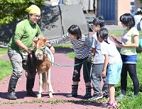被災者のストレスを軽減する馬=北海道厚真町で2018年9月11日午後0時3分、山崎一輝撮影