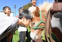 避難所生活が長引く中で、動物とふれ合うことでストレスを減らそうとボランティアで連れてこられたポニー。「何考えているんだろう」と話し、子どもが額を合わせた=北海道厚真町で2018年9月11日午前11時42分、山崎一輝撮影
