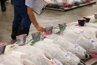 Frozen tuna are arranged at an auction site at Tsukiji fish market in Tokyo's Chuo Ward on Sept. 14, 2018. (Pool photo)