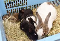 母親のルナ(右)とその子供たち。ミルクを飲むときは5匹ともルナの懐に入り込むという=愛媛県砥部町上原町の県立とべ動物園で、遠藤龍撮影