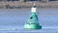 9月25日、英ロンドンに近いテムズ川で、通常は数百マイル離れた北極海に住むシロイルカ(ベルーガ)が泳いでいるのが発見された(2018年 ロイター/Toby Melville)