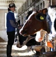 酪農業を営む山田澄恵さん(54)。地震で半日停電し、水道は1週間止まった。搾乳は比較的早くできるようになったが、受け入れ先の工場が稼働せず、6日間牛乳を捨て続けた。十分なエサと水がなかった影響で搾乳量は減っている。「自宅もめちゃくちゃだが、牛が最優先。ウチは一頭も死ななかっただけでも感謝。少しでも長生きさせてあげたい」と牛の頭をなでた=北海道厚真町で2018年9月26日午後1時15分、貝塚太一撮影
