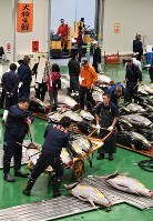 Intermediate wholesalers carry fresh tuna after the first auction at the newly opened Toyosu market in Tokyo's Koto Ward on Oct. 11, 2018. (Mainichi/Kimi Takeuchi)