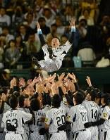 引退セレモニーでナインから胴上げされる金本知憲外野手=阪神甲子園球場で2012年10月9日、小関勉撮影