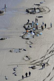 打ち上げられたイルカを救助する人たち