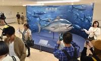 豊洲市場の一般公開が始まり、「築地市場で取引された最大級サイズの国産クロマグロ」の模型と記念撮影をする観光客ら=東京都江東区で2018年10月13日午後1時18分、竹内紀臣撮影