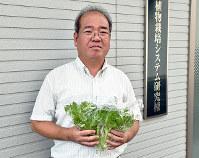 低カリウムレタスをPRする植物栽培システム研究所の三木新司課長補佐=香川県土庄町で、小川和久撮影