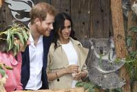 Britain's Prince Harry and Meghan, Duchess of Sussex meet Ruby, a mother Koala who gave birth to koala joey Meghan, named after Her Royal Highness, with a second joey named Harry after His Royal Highness during a visit to Taronga Zoo in Sydney, Australia, Tuesday, Oct. 16, 2018. (Dean Lewins/Pool via AP)