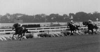 【1994年】ナリタブライアン 7馬身差の圧勝で、10年ぶり史上5頭目の3冠馬となったナリタブライアン(左)=京都競馬場で1994年11月6日撮影
