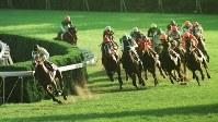 【1998年】セイウンスカイ 終始リードを保ち、4コーナーでも後続を寄せつけず逃げ切ったセイウンスカイ(左端)=京都競馬場で1998年11月8日、大崎幸二撮影