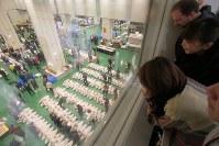 開場から1週間がたった豊洲市場でマグロの競りを見学する人たち=東京都江東区で2018年10月18日午前6時7分、和田大典撮影