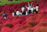 Visitors pose for a photograph with autumn kochia plants blanketing the hills at their most colorful at the Hitachi Seaside Park in the city of Hitachinaka, Ibaraki Prefecture, on Oct. 18, 2018. (Mainichi/Kimi Takeuchi)