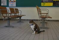 JR芸備線志和口駅の待合室からは人が消えた。それでもりょうまは待ち続けている=りょうまを見守る会提供