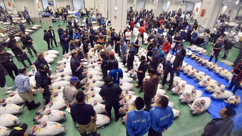EPAが豊富なマグロの競り=東京都江東区の豊洲市場で2018年10月11日、竹内紀臣撮影