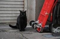 築地市場の場外を動き回る猫=東京都中央区築地で2018年9月19日、宮本明登撮影