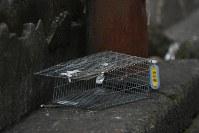 築地市場の場内には東京都の名札を付けたネズミ捕りかごが置かれていた。=東京都中央区築地で2018年9月19日、宮本明登撮影