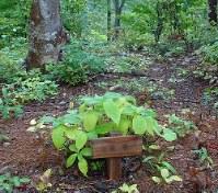 埋葬場所には名前を書いた木札が立てられる(画像の一部を加工しています)=岩手県一関市の知勝院樹木葬墓地で
