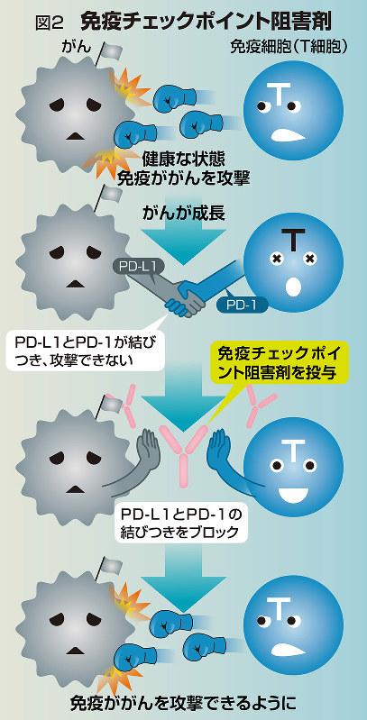 図2 免疫チェックポイント阻害剤