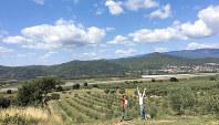プロバンスのオリーブ畑にて=2018年9月、河瀬さん提供