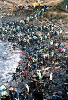 【ナホトカ号重油流出事故】ロシア船籍のタンカー「ナホトカ」号が島根県隠岐島沖の日本海で遭難。約6000トンの重油が流出し、海岸を汚染した。事故後約4カ月間で延べ約28万人のボランティアが漂着した重油の回収作業に当たった。写真は人海戦術で回収作業をするボランティアや地元の人たち=福井県三国町安島で本社ヘリから1997年01月12日撮影