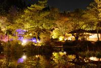 ライトアップと紅葉で、闇夜にさまざまな色で浮かび上がる木々。池の水面に映る景色も美しい=神戸市灘区六甲山町北六甲の六甲高山植物園で、黒川優撮影