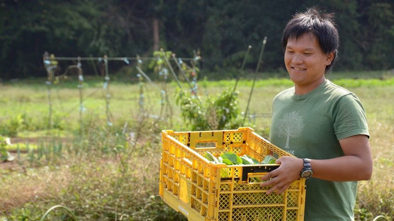 収穫作業をする繁昌農園代表の繁昌知洋さん=小高朋子撮影