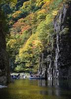 切り立った絶壁が続く「黒淵」を行き来する渡舟。木々の色づきが水面に映える=広島県安芸太田町の三段峡で、元田禎撮影